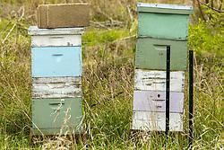 Man Made Bee Hives