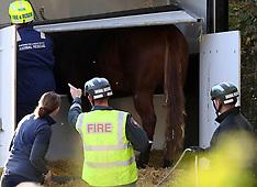 Horse Rescue Gosport