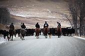 Cattle Drive HR