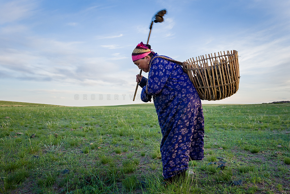 An elderly nomad woman is shoveling horse droppings for fuel in Dundgov Province, Mongolia. Photo © Robert van Sluis