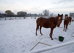 © under license to London News pictures. 27/11/2010. Horses feeding in snow and freezing temperatures near Shefford, Bedfordshire this morning (27/11/2010). The whole of the UK is expected experience sub zero temperatures and heavy snowfall over the next few weeks. Photo credit should read: Stephen Simpson/LNP