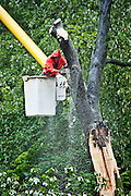 Tree removal service worker.