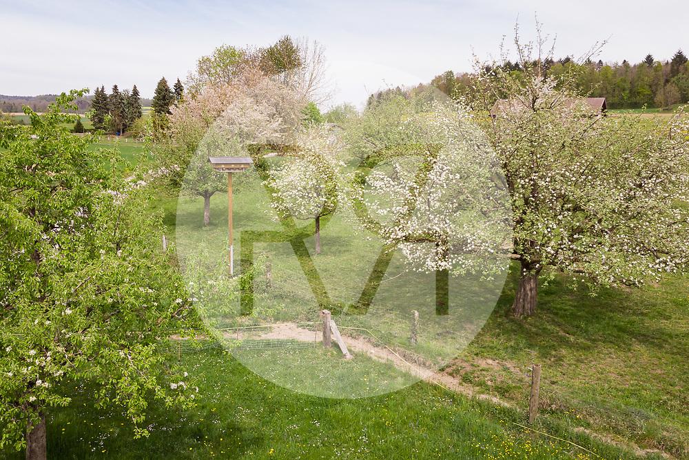 SCHWEIZ - MEISTERSCHWANDEN - Ein Vogelhotel in einem Hochstamm-Obstgarten - 23. April 2019 © Raphael Hünerfauth - https://www.huenerfauth.ch