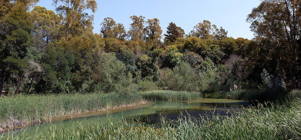 Marsh. (48634 x 22631 pixels)