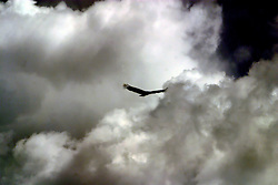 April 14 2006:  Images from a trip to Comlara Park.<br /> <br /> Turkey Vulture silhouetted against menacing storm clouds (Photo by Alan Look)