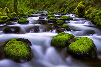 Gorton Creek flows around the mossy boulders during Spring flows in the Columbia River Gorge