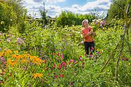 Higgledy Garden - August