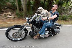 """Moonshiner Josh"" Owens with his dog ""Cutie Pie"" riding their 2005 Harley-Davidson Softail through Tamoka State Park during Daytona Beach Bike Week 2015. FL, USA. March 13, 2015.  Photography ©2015 Michael Lichter."