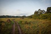 Grassland track.
