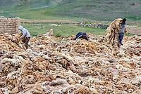 Mongolie, province de Bayan-Ulgii, région de l'ouest, ramassage des laines de mouton // Mongolia, Bayan-Ulgii province, western Mongolia, harvest of the wool