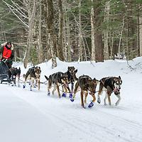 Sandwich Sled Dog Races 45 Miles.