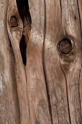Driftwood Detail, Holbrook Island Sanctuary, Brooksville, Maine, US