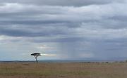 Kenya, Lake Nakuru National Park,