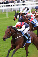 COPPER KNIGHT (3) ridden by David Allan and trained by Tim Easterby winning The Parsonage Hotel and Cloisters Spa Handicap Stakes over 5f (£20,000)   during the Countryside Raceday, October Finale at York Racecourse, York, United Kingdom on 12 October 2018. Pic Mick Atkins