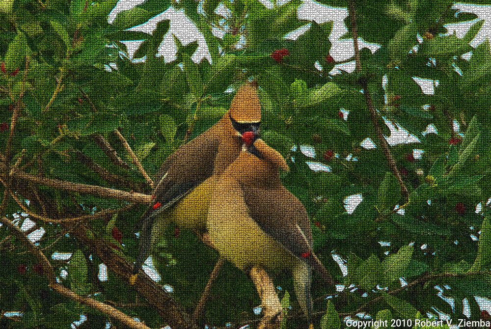 """""""Sharing a Honeysuckle Berry""""-An image of two cedar wax-wings sharing a honeysuckle berry in a mosaic pattern finish."""