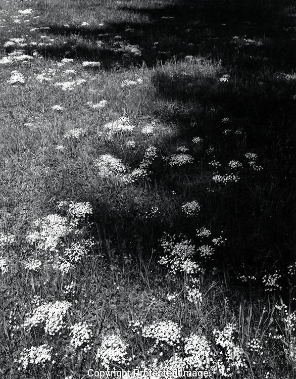 Frost Farm, Spring, 1983