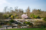 Spring time at RHS Wisley