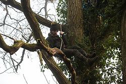 Denham, UK. 6 February, 2020. An environmental activist from Extinction Rebellion climbs an oak tree in Denham Country Park designated for felling as part of works associated with the HS2 high-speed rail link. Works planned in the immediate vicinity include not only the felling of ancient trees but also the construction of a Bailey bridge, compounds and fencing, some of which in a wetland nature reserve forming part of a Site of Metropolitan Importance for Nature Conservation (SMI).