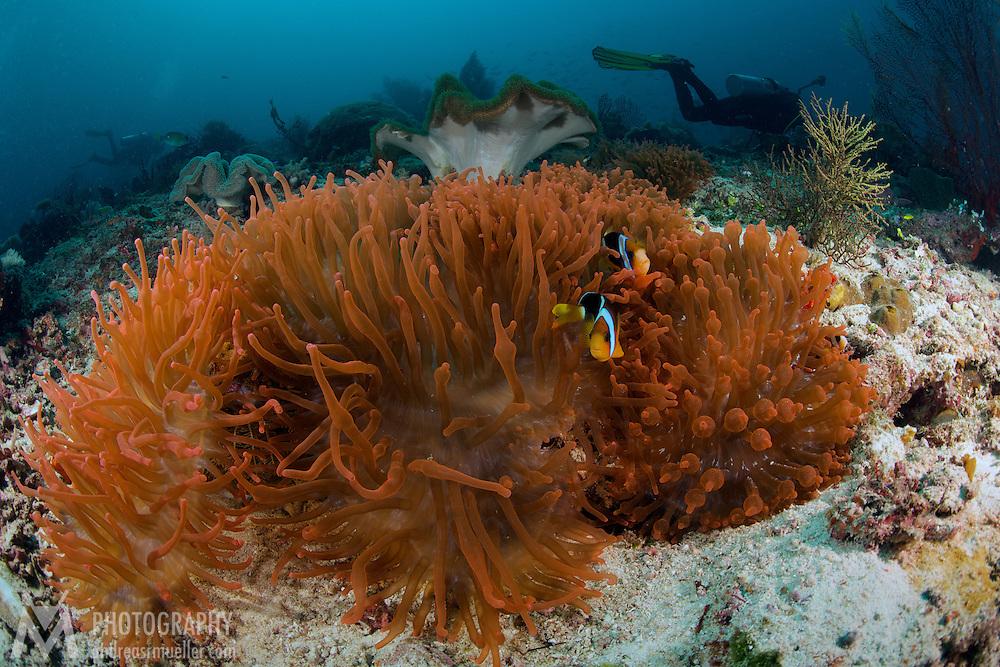 Dive Spot: Mayhem