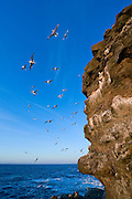 Bird cliffs in Grimsey, Iceland