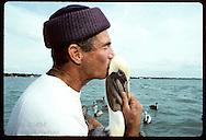 Suncoast Seabird Sanctuary employee kisses brown pelican goodbye after removing fish hook from rump in intracoastal waterway near St. Petersburg, Florida.