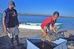 J. Nichols & Louise With Black Sea Turtle