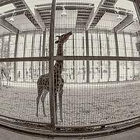Zoo of Lyon: behind the scenes