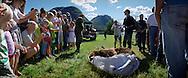Bear shot, at Kjosnes.15 june 2008