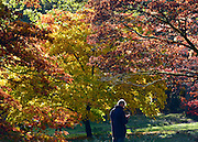 © Licensed to London News Pictures. 30/10/2012. Winkworth, UK A man looks at his mobile phone amongst the colourful trees. Autumn Colour at Winkworth Arboretum in Surrey today 30th October 2012. Photo credit : Stephen Simpson/LNP