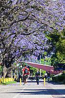 ARBOLES FLORECIDOS DE JACARANDA, BARRIO DE RECOLETA, CIUDAD DE BUENOS AIRES, ARGENTINA (PHOTO © MARCO GUOLI - ALL RIGHTS RESERVED)