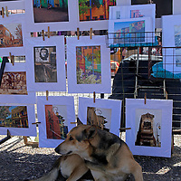 South America, Argentina, Buenos Aires. Dog keeps watch over artist's display in La Boca.