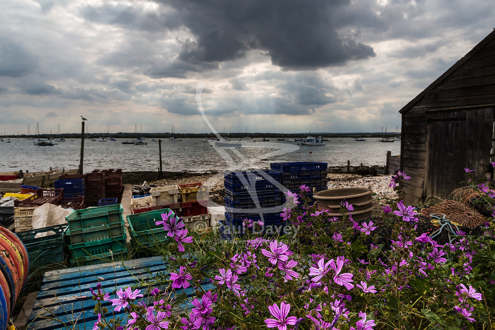 Famous for its oysters, plastic crates and baskets lie among the flowers and tonnes of discarded oyster shells under a brooding sky at West Mersea, near Colchester in Essex. West Mersea, Essex, July 10 2019.