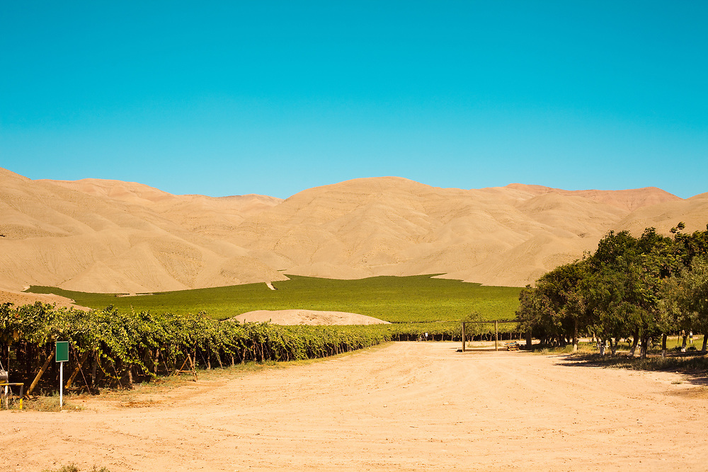 Vineyard crops in the middle of the desert in Tierra Amarilla, Chile