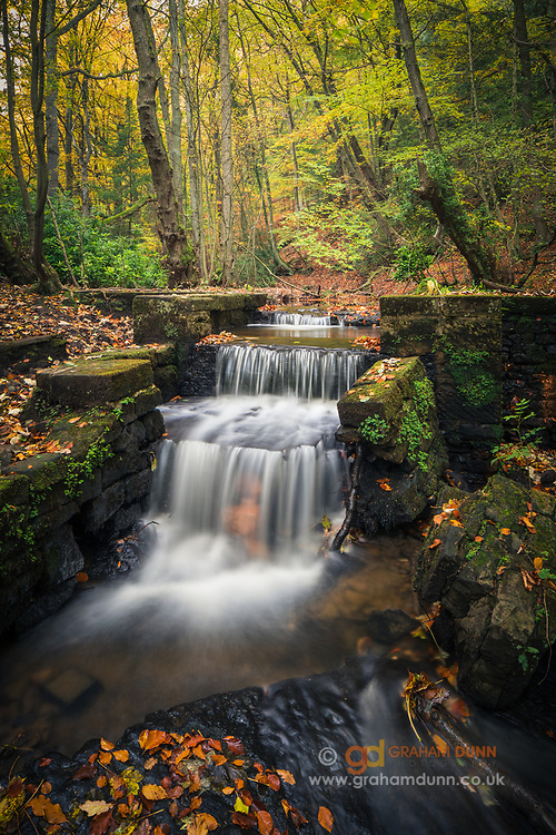Waters of Limb Brook flow through a colourful Limb Valley in autumn. A seasonal woodland scene in South Yorkshire.
