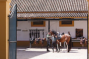 Grooms at the stables of at the Royal Andalusian School of Equestrian Art (Real Escuela de Equetsre) Andalucia, Jerez, Spain
