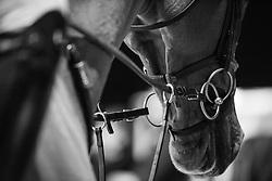 Licou<br /> Laiterie de Montaigu Trophy<br /> Longines Masters Paris 2016<br /> © Hippo Foto - Cara Grimshaw