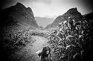 An elderly Vietnamese woman walks out a corn field in Ha Giang Province, Vietnam, Southeast Asia