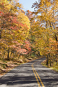 Fall leaf colors at in Great Smoky Mountains National Park, on the Tennessee side, in southeastern USA.
