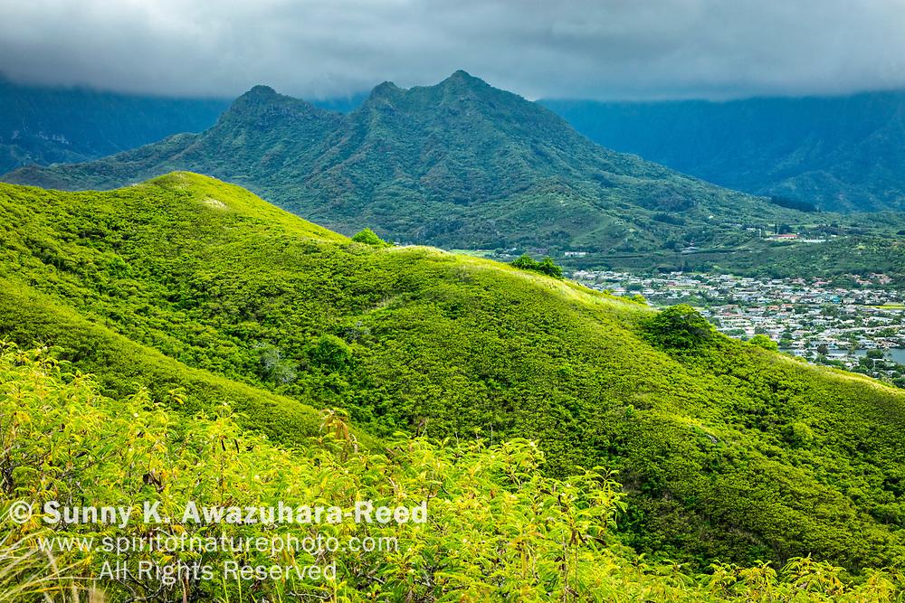 Koʻolau Mountains and Kailua Neighborhood, viewed from lush green hill on Ka'iwa Ridge. Kailua, Island of Oahu, Hawaii.