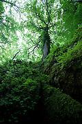 Trees at La Verna monastery, Tuscany, Italy