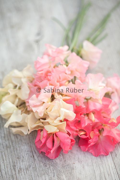 Lathyrus odoratus 'Juliet', 'Heaven Scent' and 'Valerie Harrod' - sweet pea