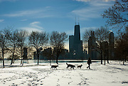 A depiction of life along Chicago's Lake Shore Drive.