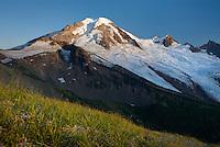 Mount Baker (elevation 10,778feet (3,285m) seen from the grassy slopes of Chowder Ridge, Mount Baker Wilderness Washington USA