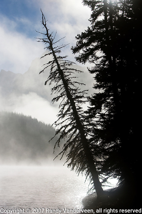 © 2007 Randy Vanderveen, all rights reserved.Jasper, Alberta.A dead spruce tree leans out over the foggy waters of Maligne Lake early in the morning.