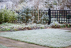 Hoar frost on lawn