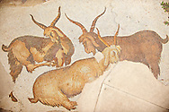 6th century Byzantine Roman mosaics of goats from the peristyle of the Great Palace from the reign of Emperor Justinian I. Istanbul, Turkey. .<br /> <br /> If you prefer to buy from our ALAMY PHOTO LIBRARY  Collection visit : https://www.alamy.com/portfolio/paul-williams-funkystock/istanbul.html<br /> <br /> Visit our TURKEY PHOTO COLLECTIONS for more photos to download or buy as wall art prints https://funkystock.photoshelter.com/gallery-collection/3f-Pictures-of-Turkey-Turkey-Photos-Images-Fotos/C0000U.hJWkZxAbg .<br /> <br /> If you prefer to buy from our ALAMY PHOTO LIBRARY  Collection visit : https://www.alamy.com/portfolio/paul-williams-funkystock/great-palace-mosaic-istanbul.html<br /> <br /> Visit our ROMAN MOSAIC PHOTO COLLECTIONS for more photos to download  as wall art prints https://funkystock.photoshelter.com/gallery-collection/Roman-Mosaics-Art-Pictures-Images/C0000LcfNel7FpLI