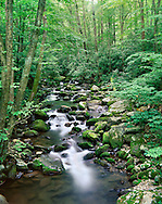 A Quiet Stream In The Great Smoky Mountains National Park, Tennessee