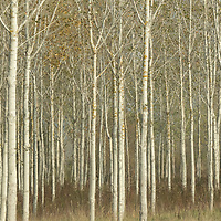 Trees are seen in Western Hungary (about 200 kilometres west of capital city Budapest), Hungary on Oct. 19, 2017. ATTILA VOLGYI