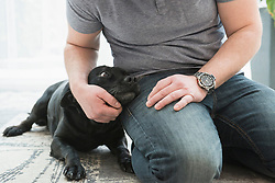 Close-up of man's hand stroking dog