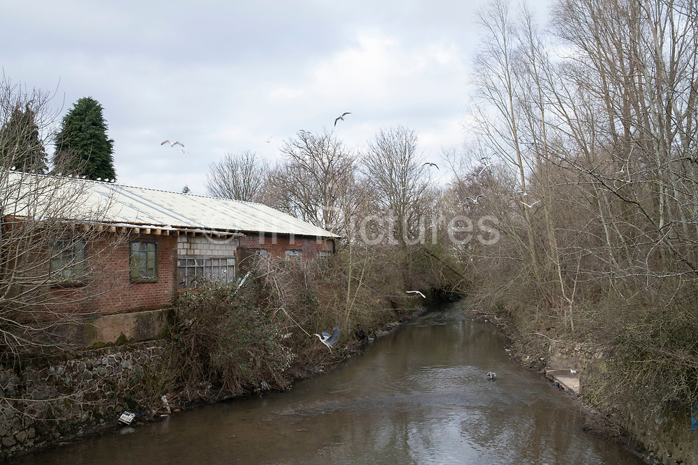 Herons on the River Cole at Springfield on 11th February 2021 in Birmingham, United Kingdom.